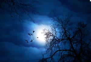 Moonlit night by Wargus Estor via KosherSamurai